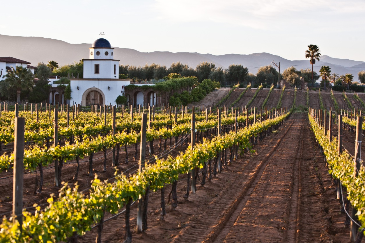Adobe_guadalupe_winery_2.jpg